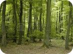 Géomètre Forêt